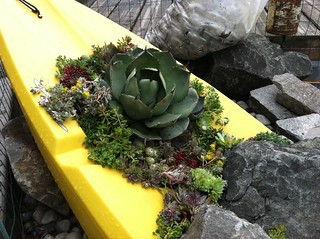 Agave in Kayak
