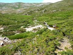 Traversée Frauletu-Giavingiolu : ruisseau de Chiuvone dans le virage à gauche