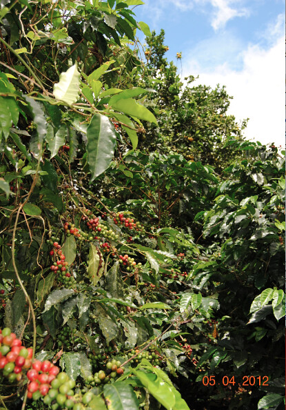 7644803058 9f8f5311f9 z Ecuador Coffee Farm for Sale