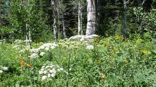 Meadow L1050278