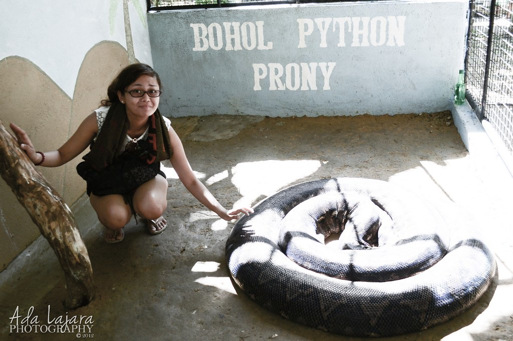 Largest Python in the Philippines, Prony