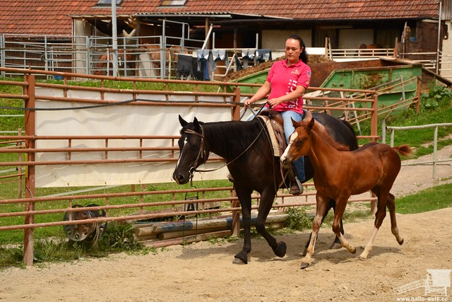 Pferdehof (18)