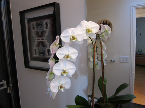 orchids IMG_0953
