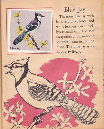 Blue Jay page (Little Golden Activity Book: Bird Stamps)
