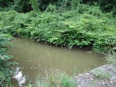 Gray Creek