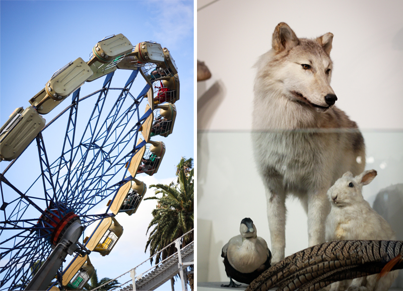 Luna park and wolf