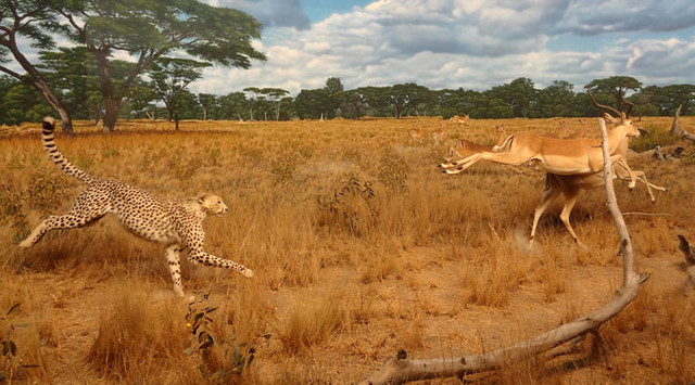 safari-scene