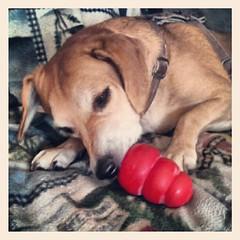 Sophie and her frozen #peanutbutter #dogtreat #breakfast #kong  #happydog #adoptdontshop #rescue #petstagram #instadog #dogstagram #dogsofinstagram #summer