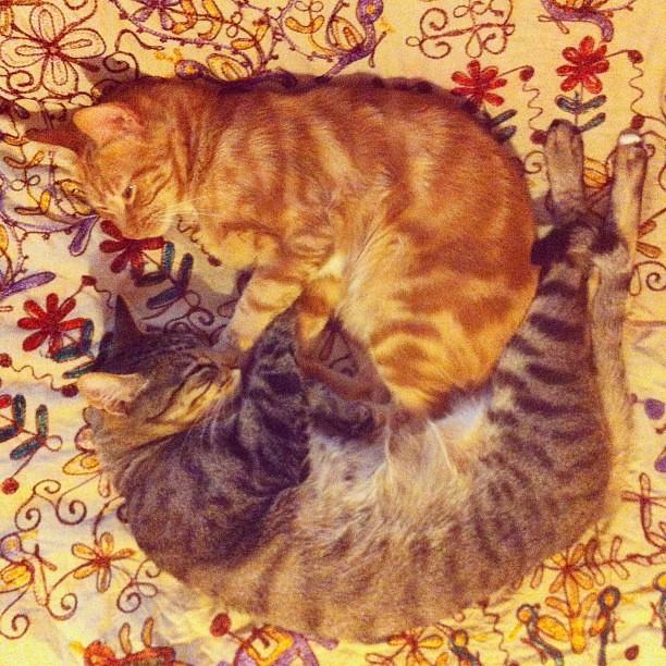 Dois gatos a dormir