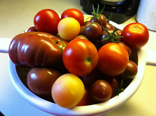 What 5.5lbs of homegrown tomatoes looks like.