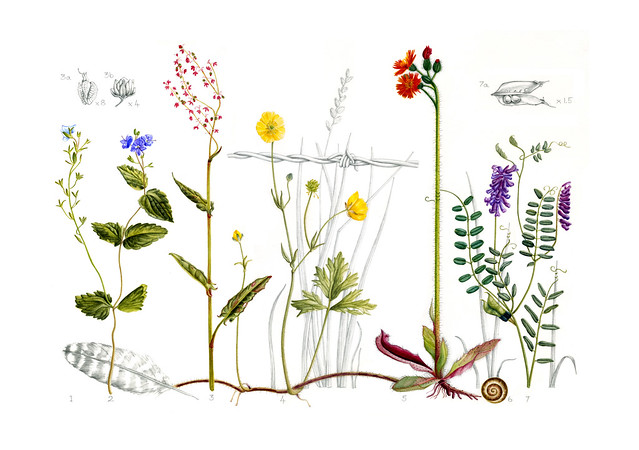A10 Five wildflowers in their grassy hedgerow habitat