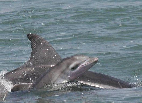 Dolphin watching in Peru with Nature Expeditions 02