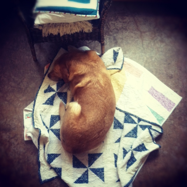 Pup and quilts