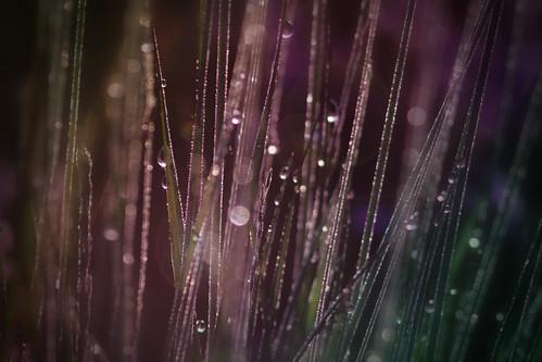[フリー画像素材] 花・植物, 葉っぱ, 雫・水滴 ID:201208200600