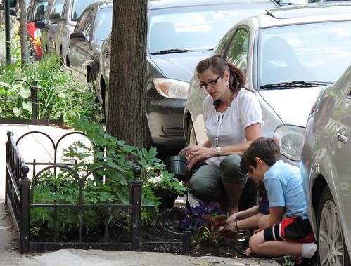 Tree Stewardship