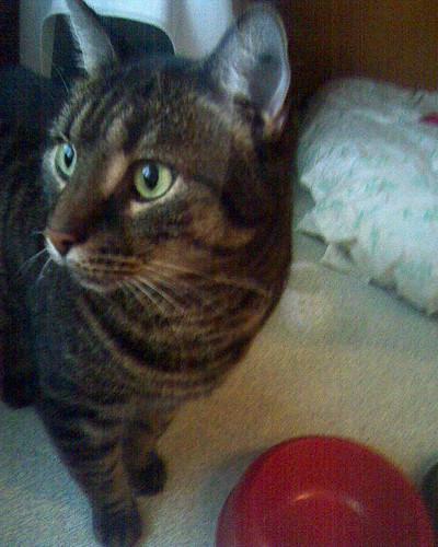 Shelter cat 2