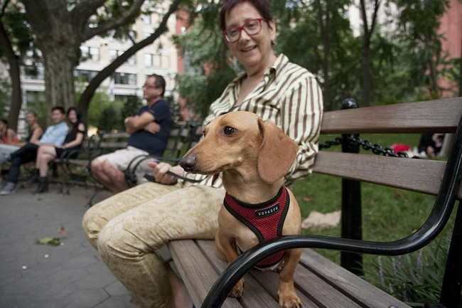 Daschund, Washington Sq. Park