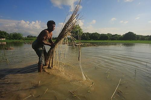 water canon nadia asia wide 2012 westbengal rurallife jute ruralindia sigma1020 krishnanagar ruralbengal canon40d samird