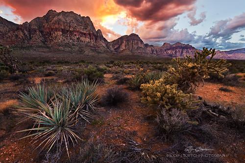 redrockcanyon sunset landscape desert nevada explore redrock yucca fireinthesky cholla d800 uwa explored oakcreektrail gradnd nikond800 nikon1635mmf4vr bjornburton