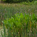 Small photo of Stormwater management pond