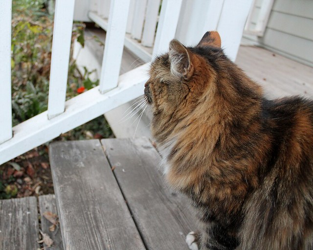 On the porch with Mamakitty, 1