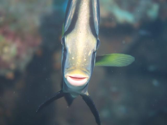 アカククリは正面顔がオススメw