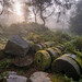 Bolehill Millstones in the Mist by James G Photography