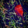 Leaf and dewy grass, morning time. #nashvilleil #washingtoncountyil #atmyfeet #textures #dew