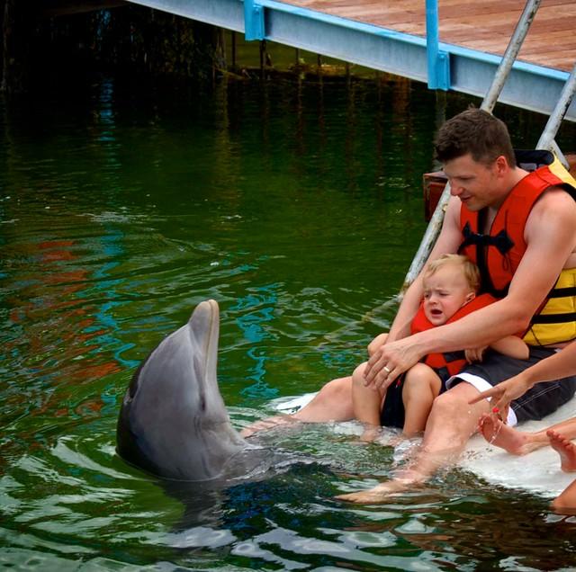 anteketborka.blogspot.com, dauphins1