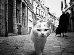 Lille's Cat