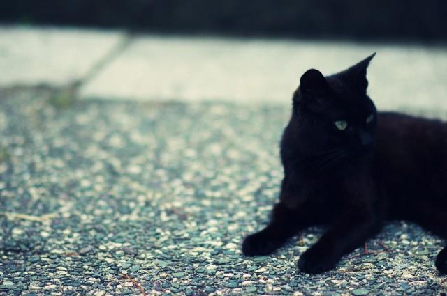 cat (76)