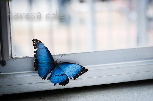 butterflies-1-9