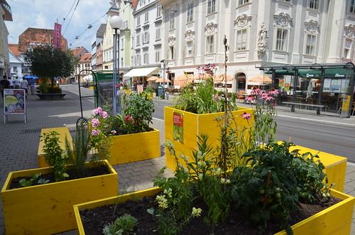 Vorstadtgarten 2