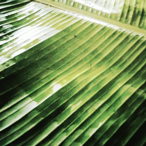 food green lunch leaf tamil nadu bananna banannaleaf