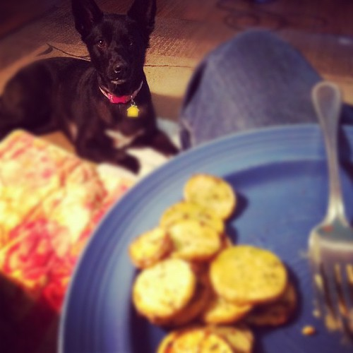 Kassie wants to eat vegan too #vegan #dogs