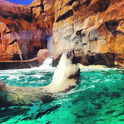 #Polar bear, #Zoo, #Pinguin, we scout locations for all media by Team MaPiTo | Location scouts & Location managers