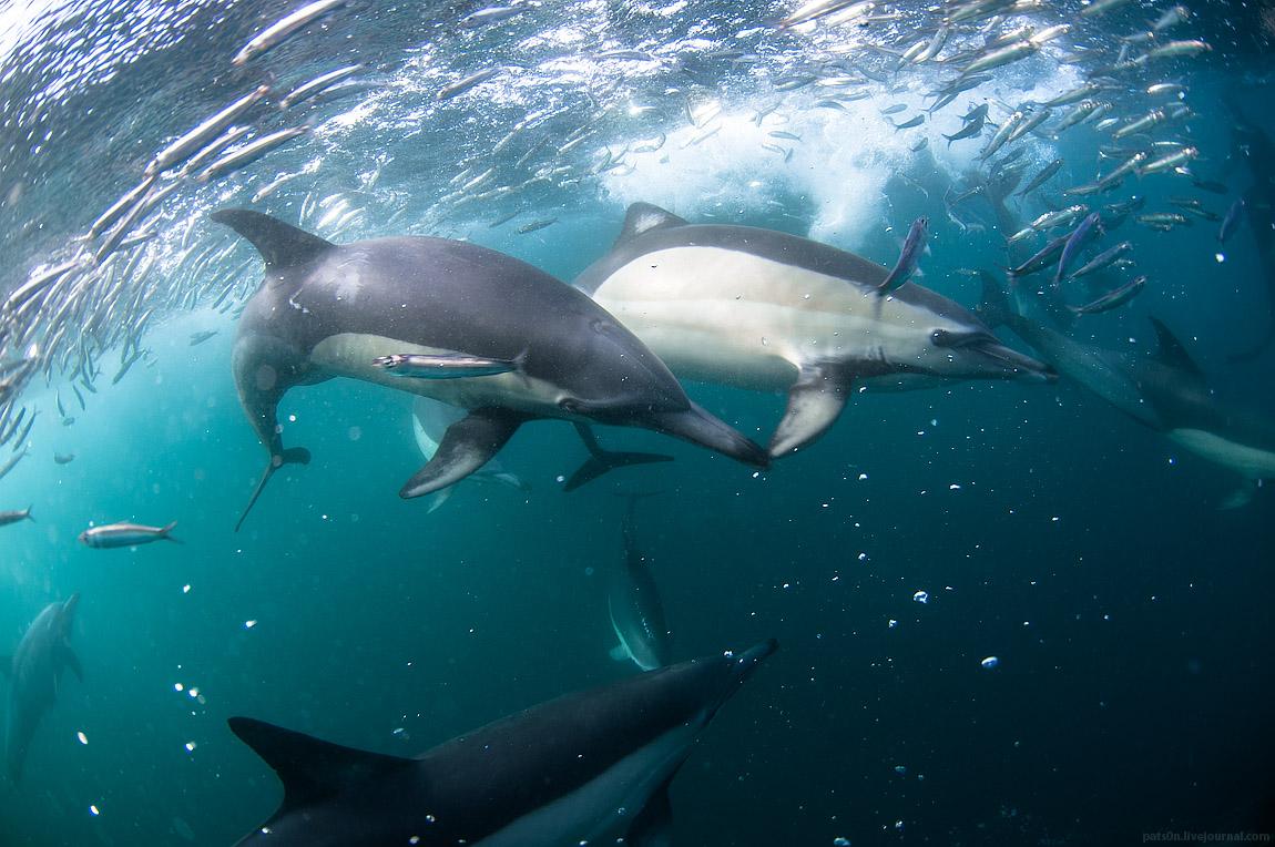 the sardine run 2012 #5