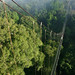 The canopy walkway at Sacha Lodge
