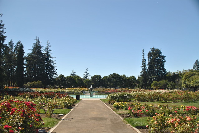 San Jose Municipal Rose Garden Flickr Photo Sharing