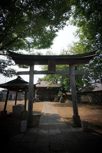 #41 The Giant Zelkova of Touya Shrine