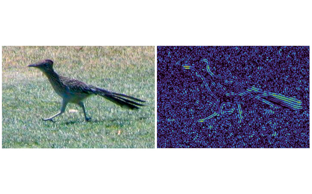 A photo a roadrunner bird and model of neural activity of the visual cortex