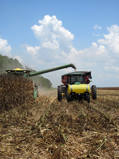Picture of corn being harvested.