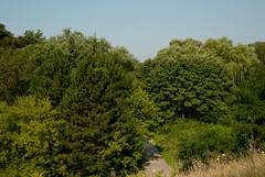 Taylor Creek Park