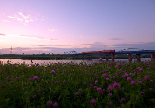 sunset train lumix railway hachinohe 夕暮れ 夕焼け redclover trifoliumpratense 鉄道 列車 八戸 アカツメクサ 八戸線