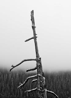 Old Wood (B&W)