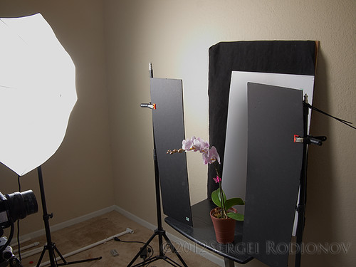3 views of Orchid - setup 2