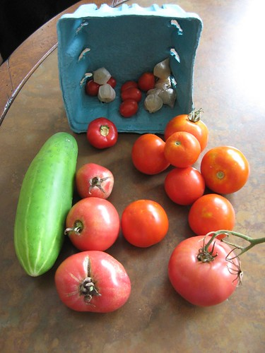 harvest 8-8