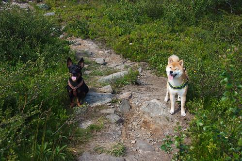 Nöjda fjällhundar