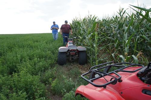 Dan and Andy walk the edge of the corn