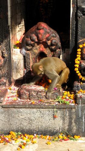 Funny monkey, Monkey Alter